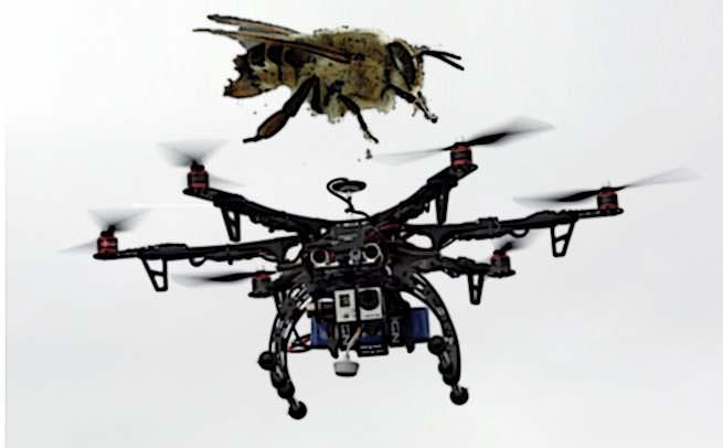 Bee Vs. Drones